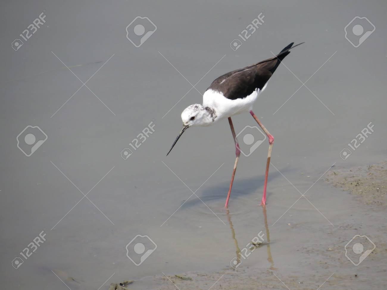 water bird Stock Photo - 19189550