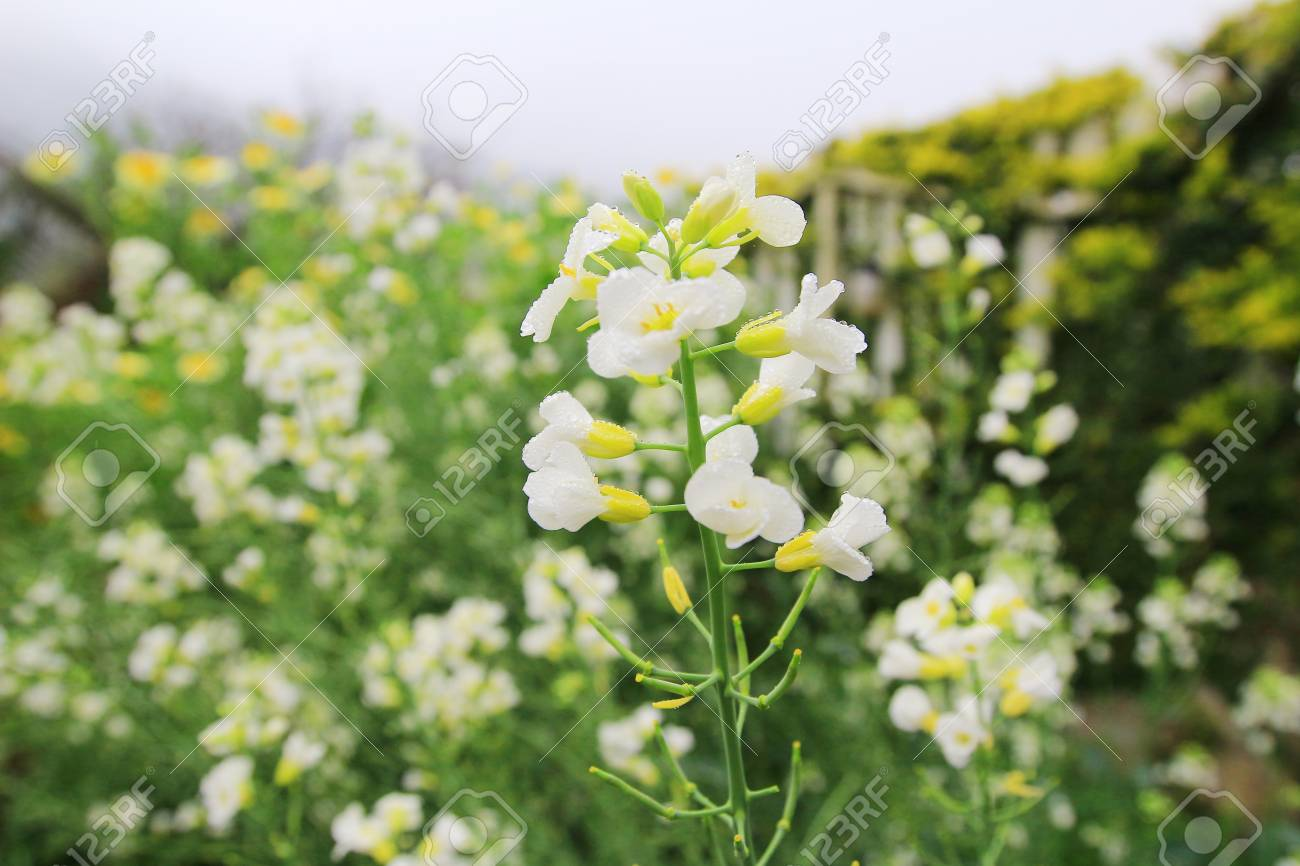 White Flower Bed Stock Photo Picture And Royalty Free Image Image