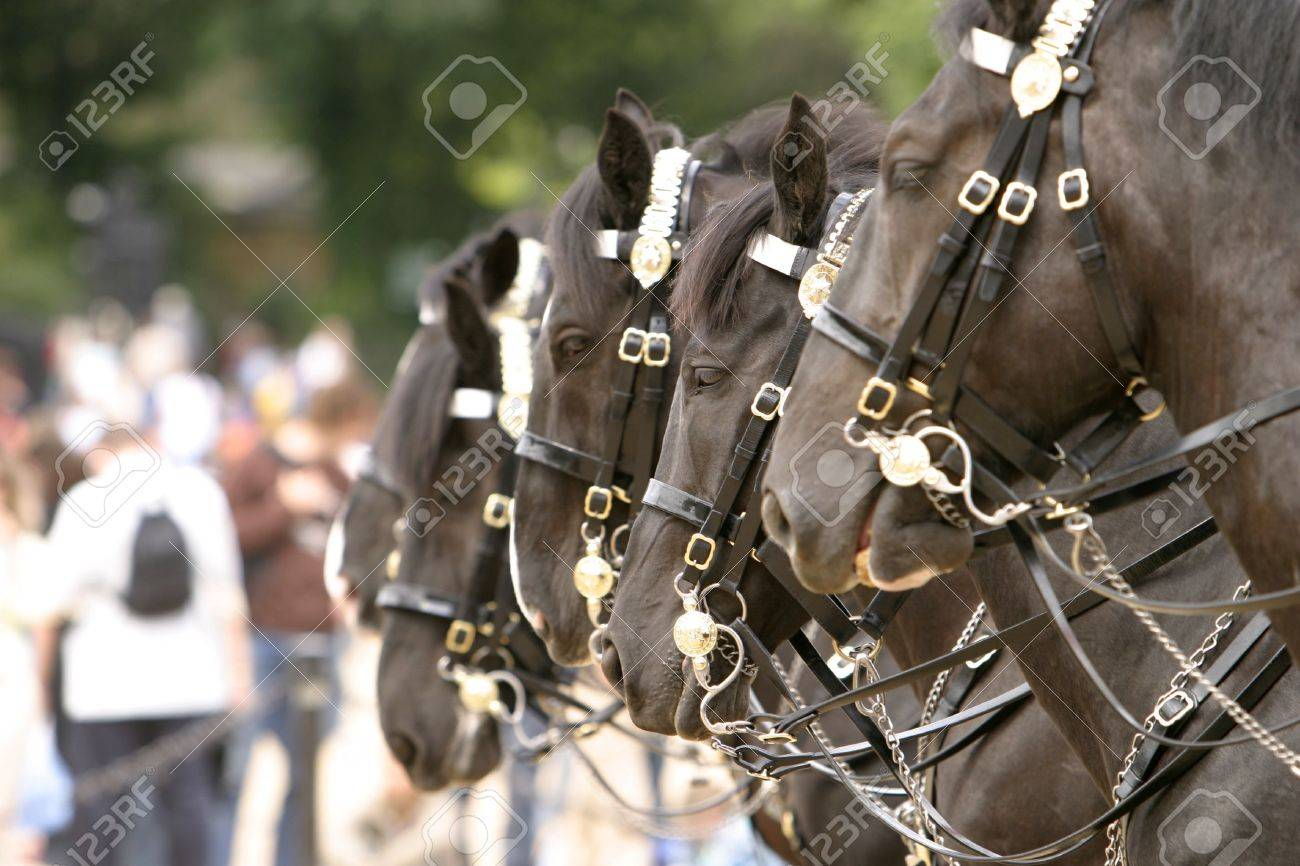 Four horses in a row Stock Photo - 504188