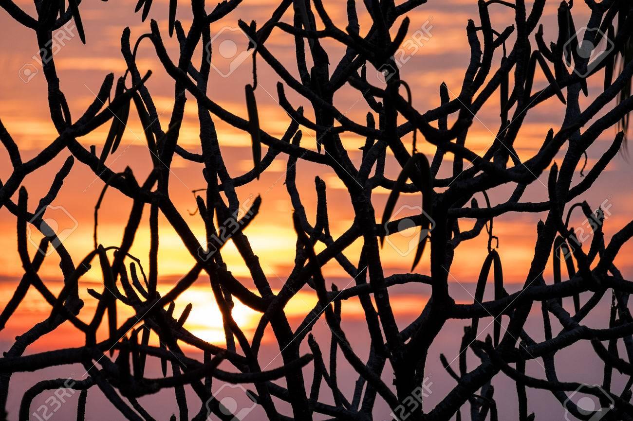 Ergebnisse zu: Angulus | Bunte