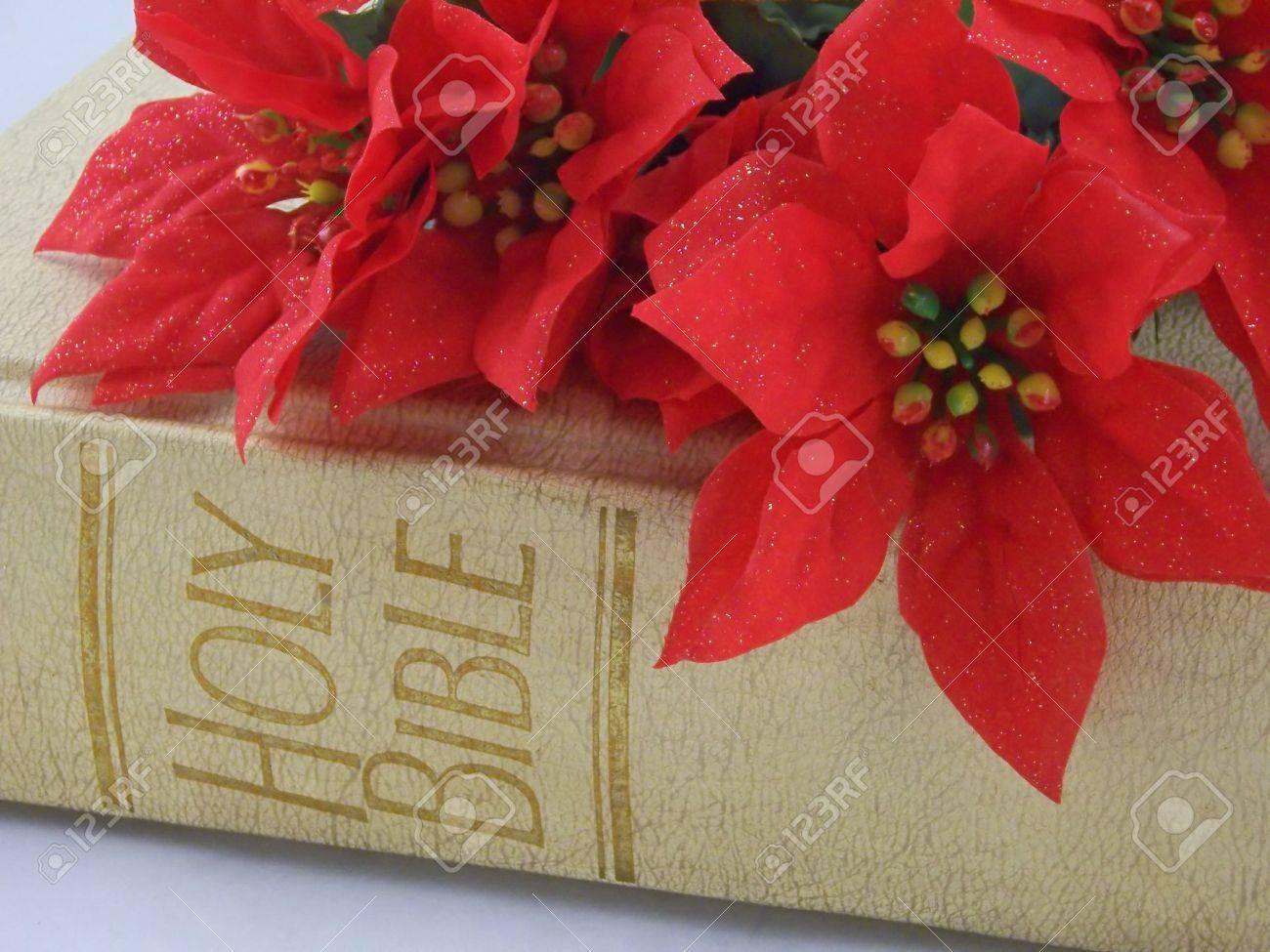 red poinsettias on top the holy bible stock photo picture and