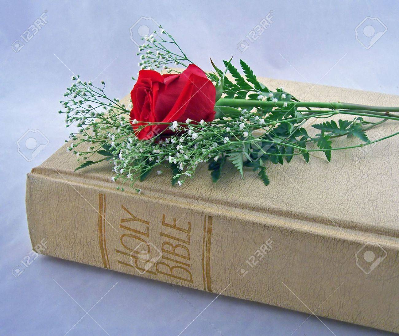 The Holy Bible With One Red Rose Stock Photo Picture And Royalty