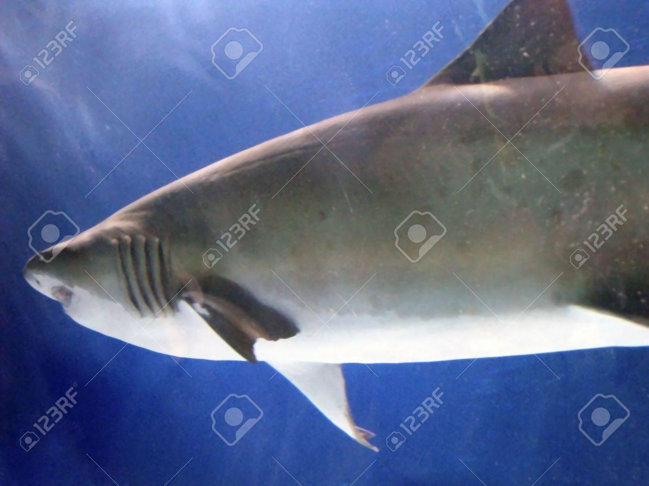photo of a shark in an aquarium Stock Photo - 2954510