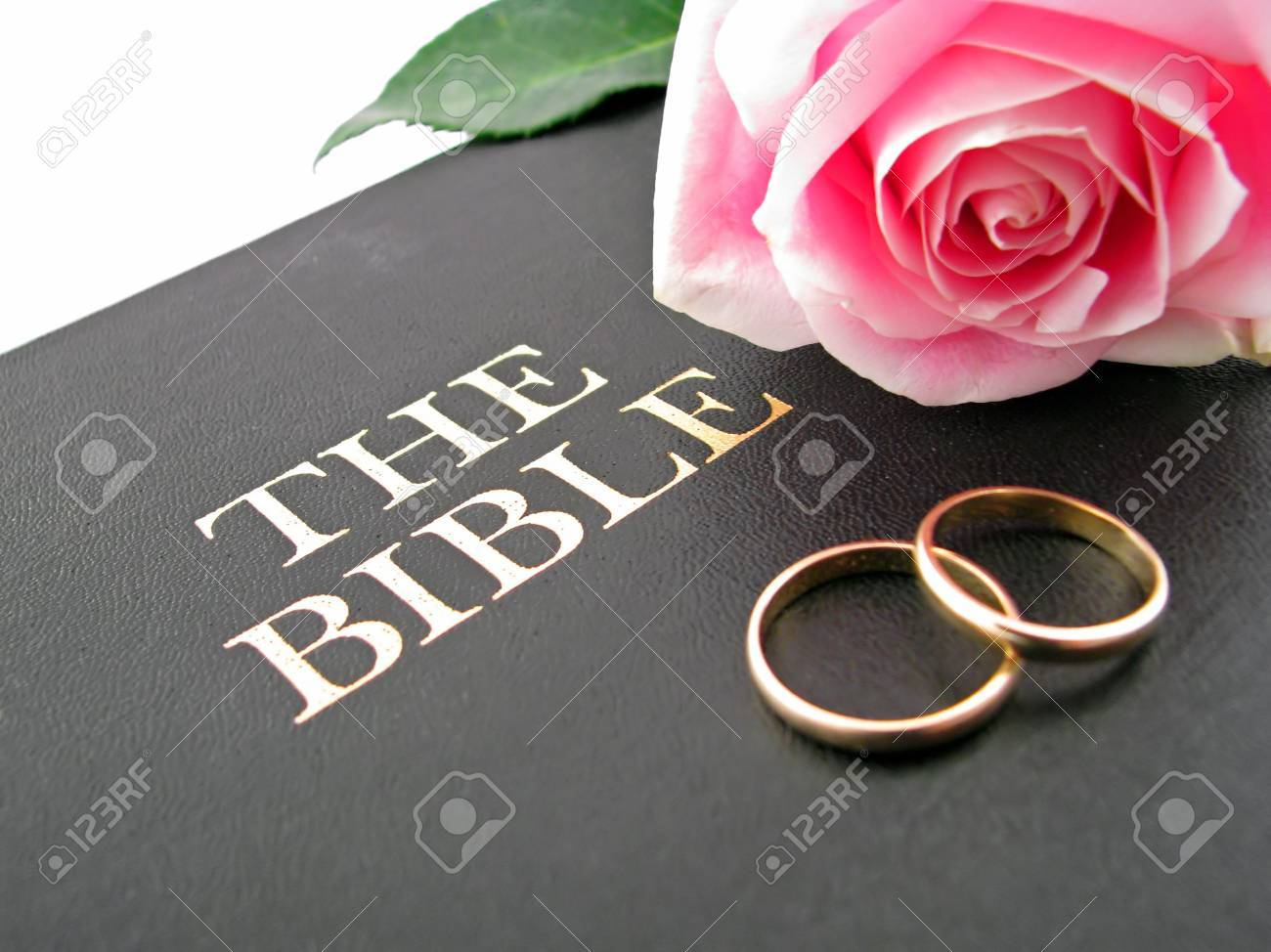 One Pink Rose And Two Wedding Bands On The Bible Stock Photo