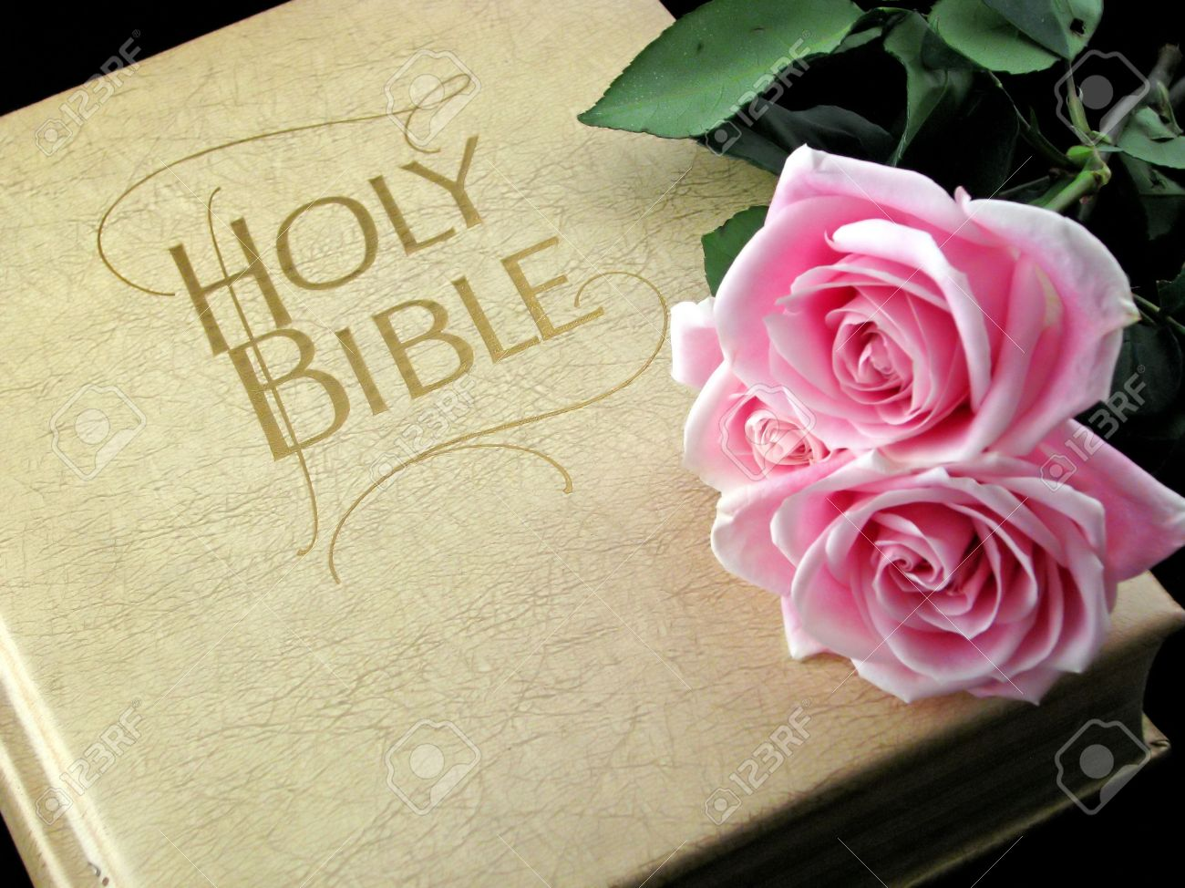 The Holy Bible And Three Pink Roses Stock Photo Picture And Royalty