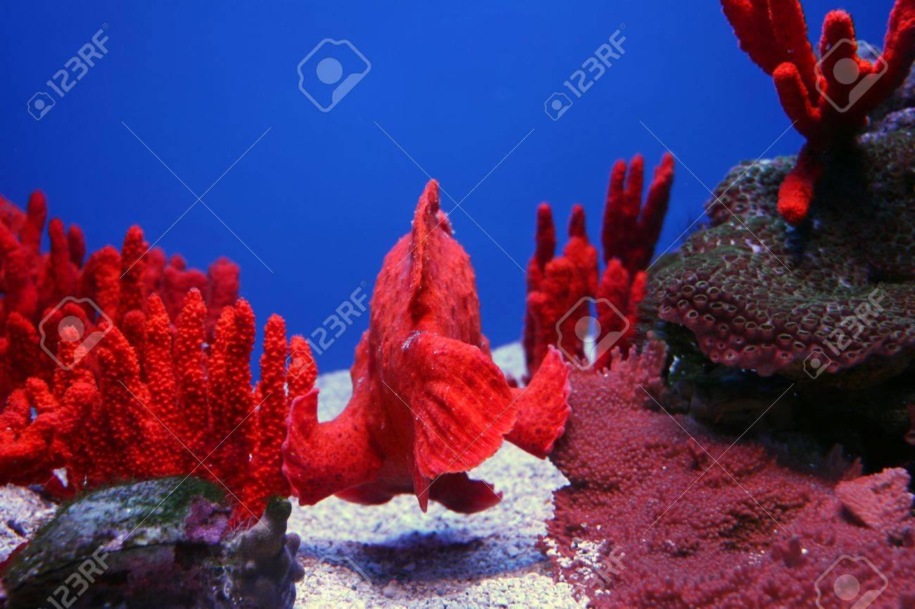 Colorful Tropical Pacific Fish in Aquarium Exhibit Stock Photo - 8253302
