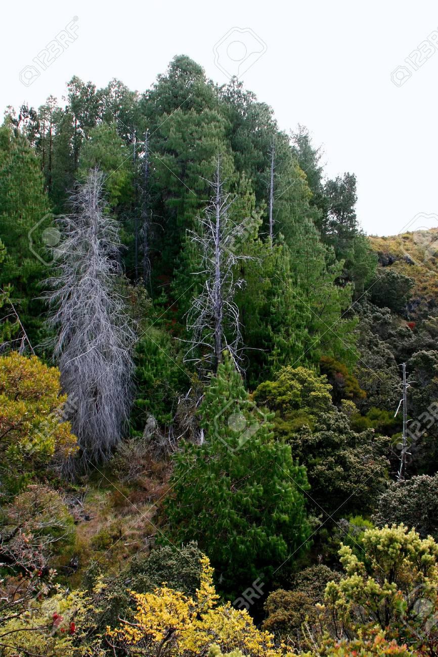 Beautiful Haleakala National Park Maui Island Hawaii Stock Photo - 13565110