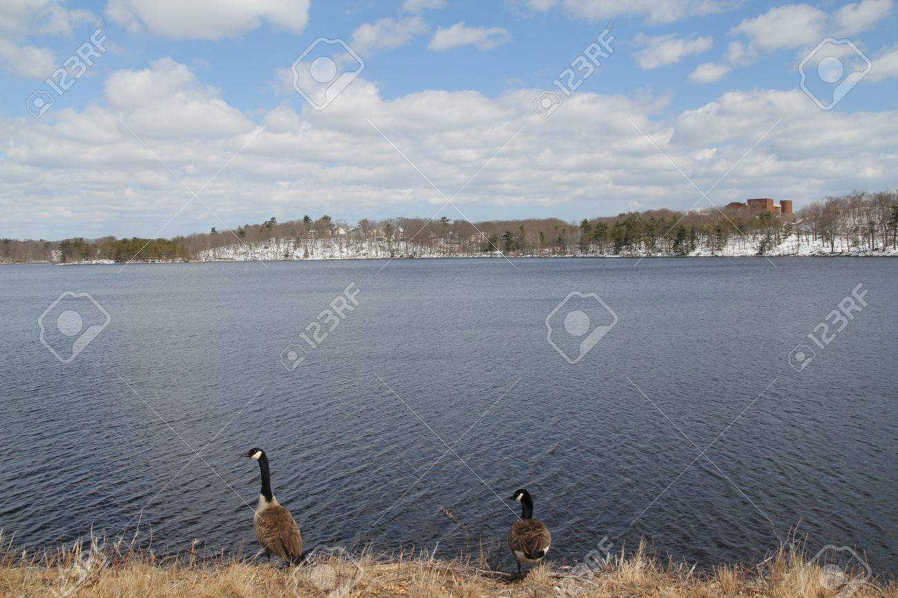 A pair of beautiful Birds at Breed Pond - 19397988