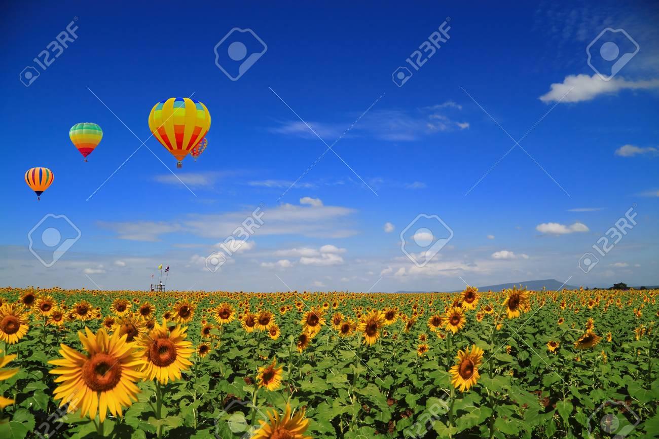 sunflower field and Balloon Stock Photo - 9112798