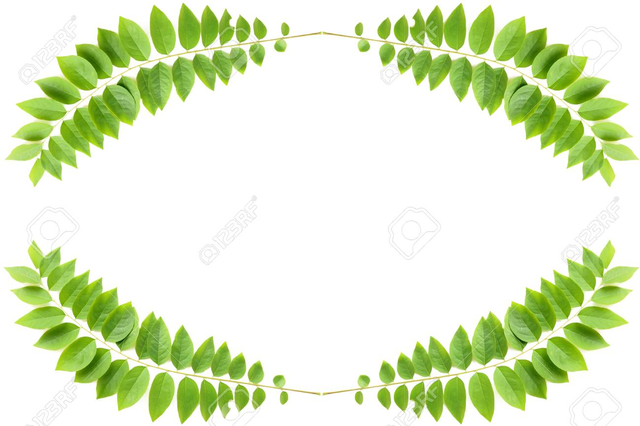 green leaf on white background Stock Photo - 9381714