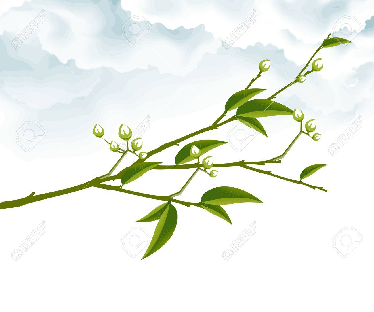 Tree Branch with Green Leaves . Stock Vector - 8307460