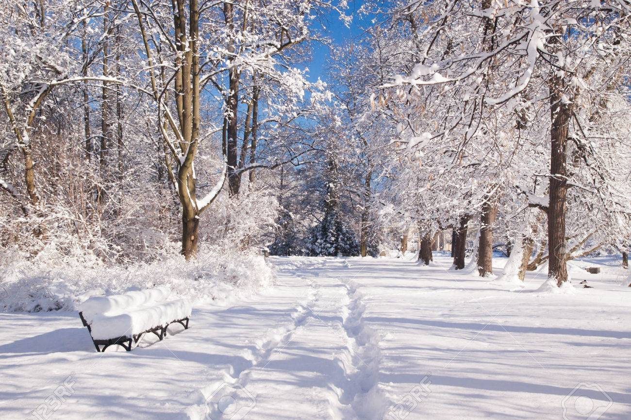 Branches Covered With Snow In Warsaw Park Lazienki During Winter