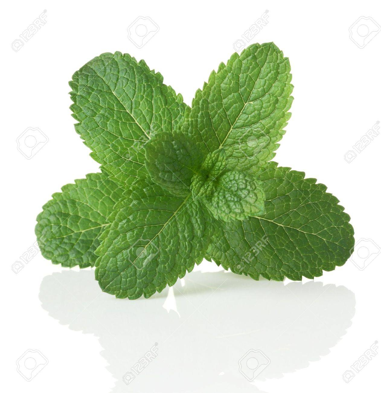 Green mint. Isolated over white Stock Photo - 7624038