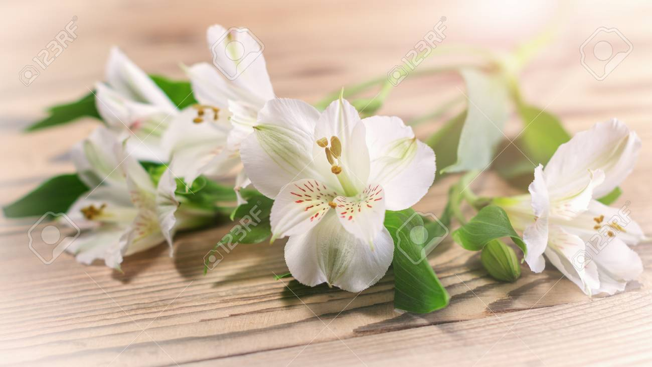Delicate White Flowers In The Warm Sunshine On A Wooden Surface