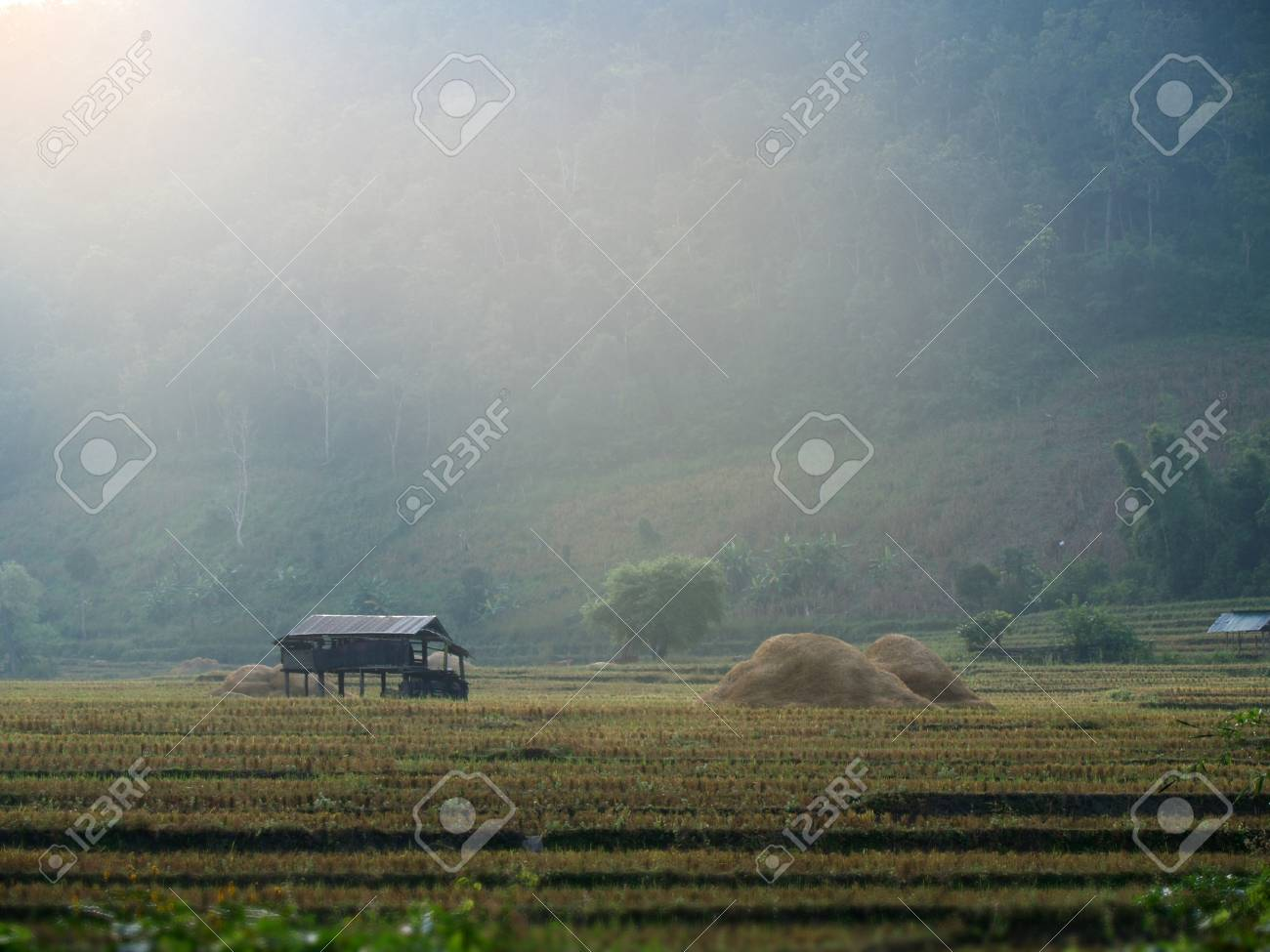 landscape farm and hut in morning Stock Photo - 18049121