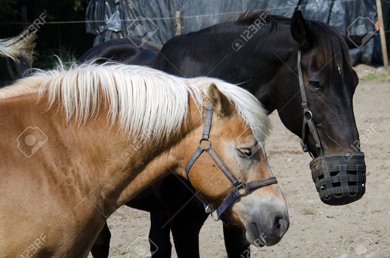 horses Stock Photo - 10509441