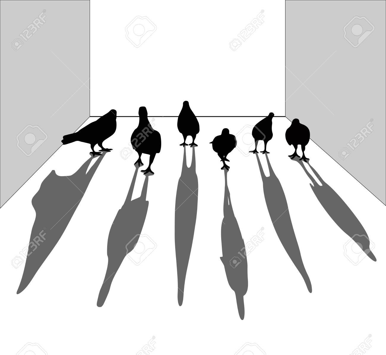 Silueta De Pájaro Paloma Caminando En El Piso. Parece Un Gángster ...