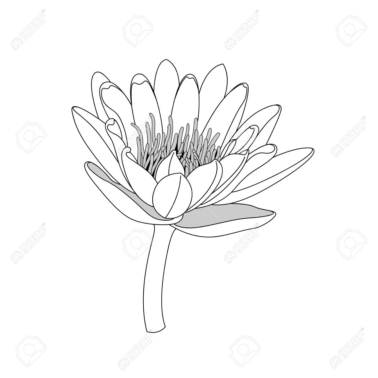 Simple Line Lotus Flower Black And White Isolated Hand Draw