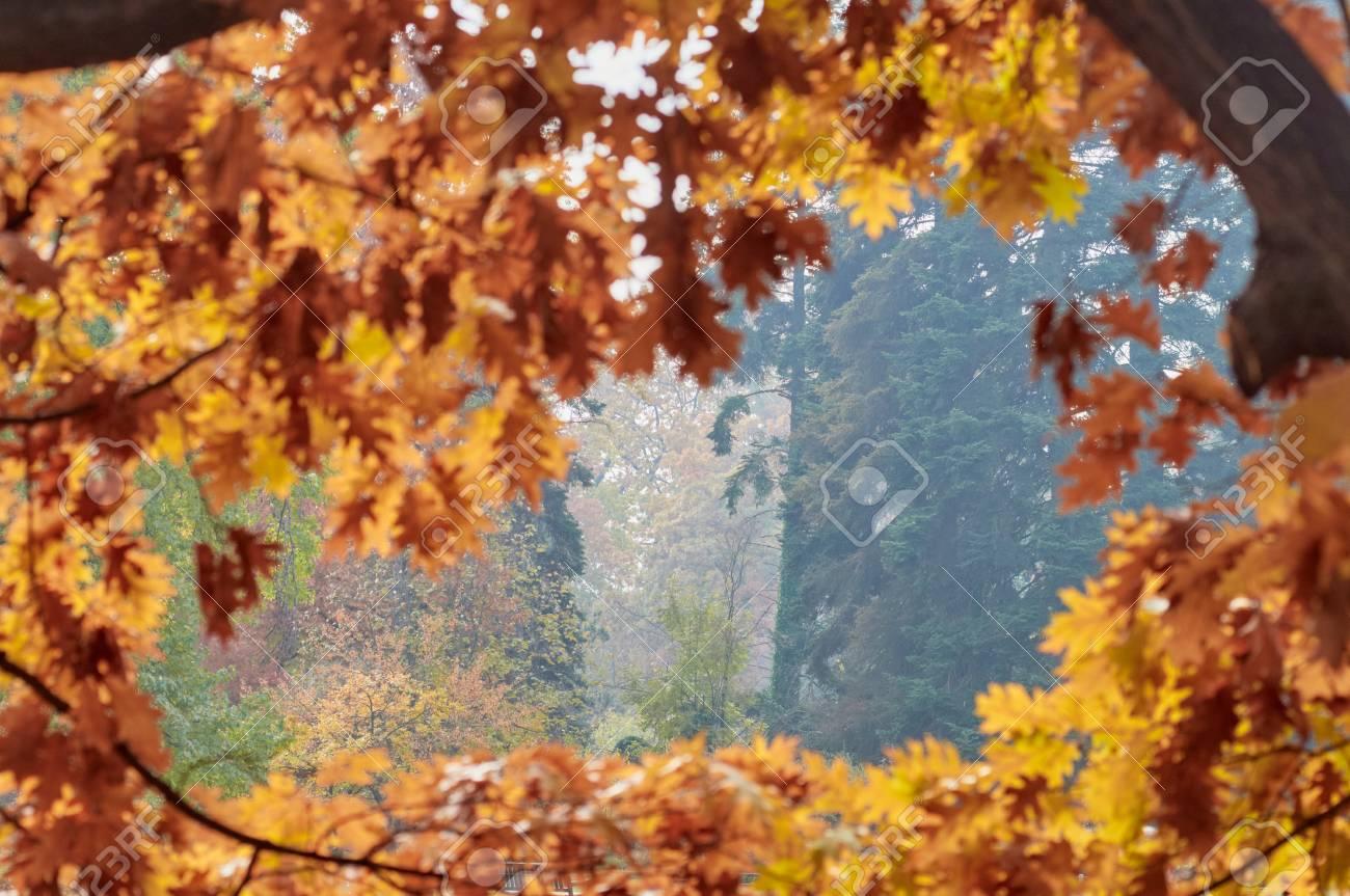 Goldene Blätter Des Herbstes Im Rahmen Im Freien Unscharf, Aber ...