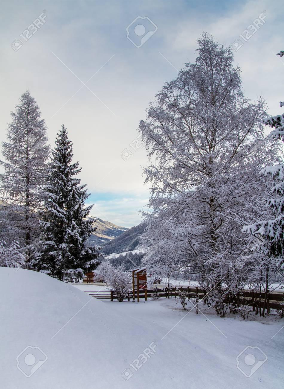 Snowbound Trees In Austria Town Krimml Zillertal Valley