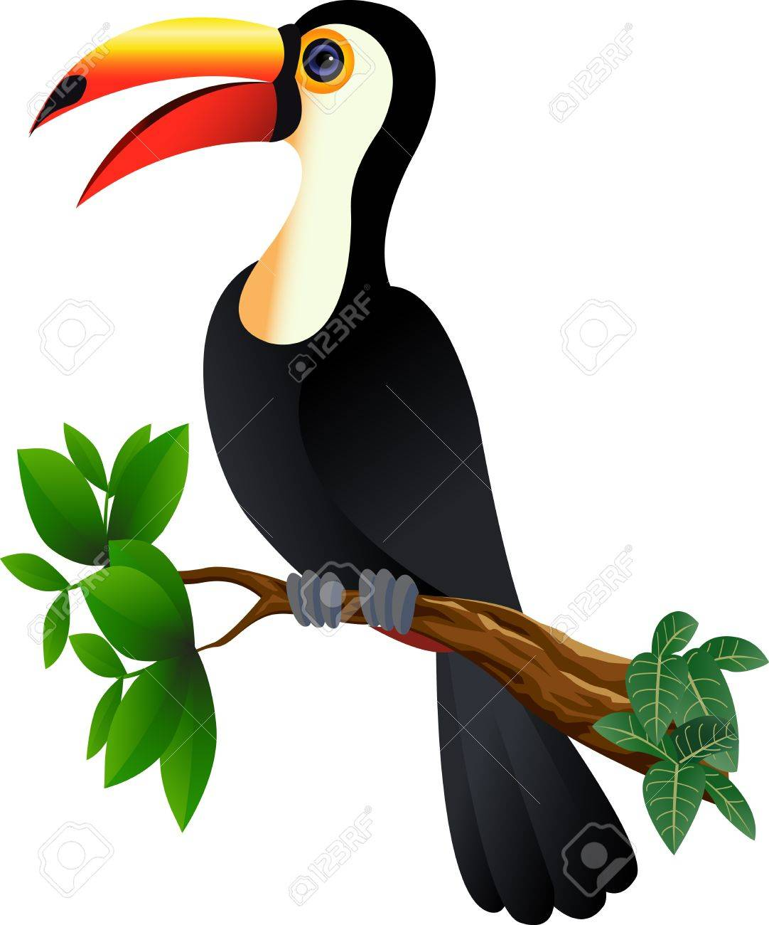 funny toucan bird Stock Vector - 12832933