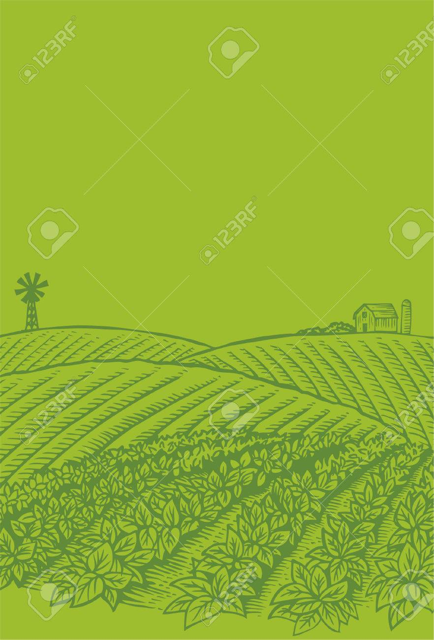 Hand drawn of vegetables field - 31555563