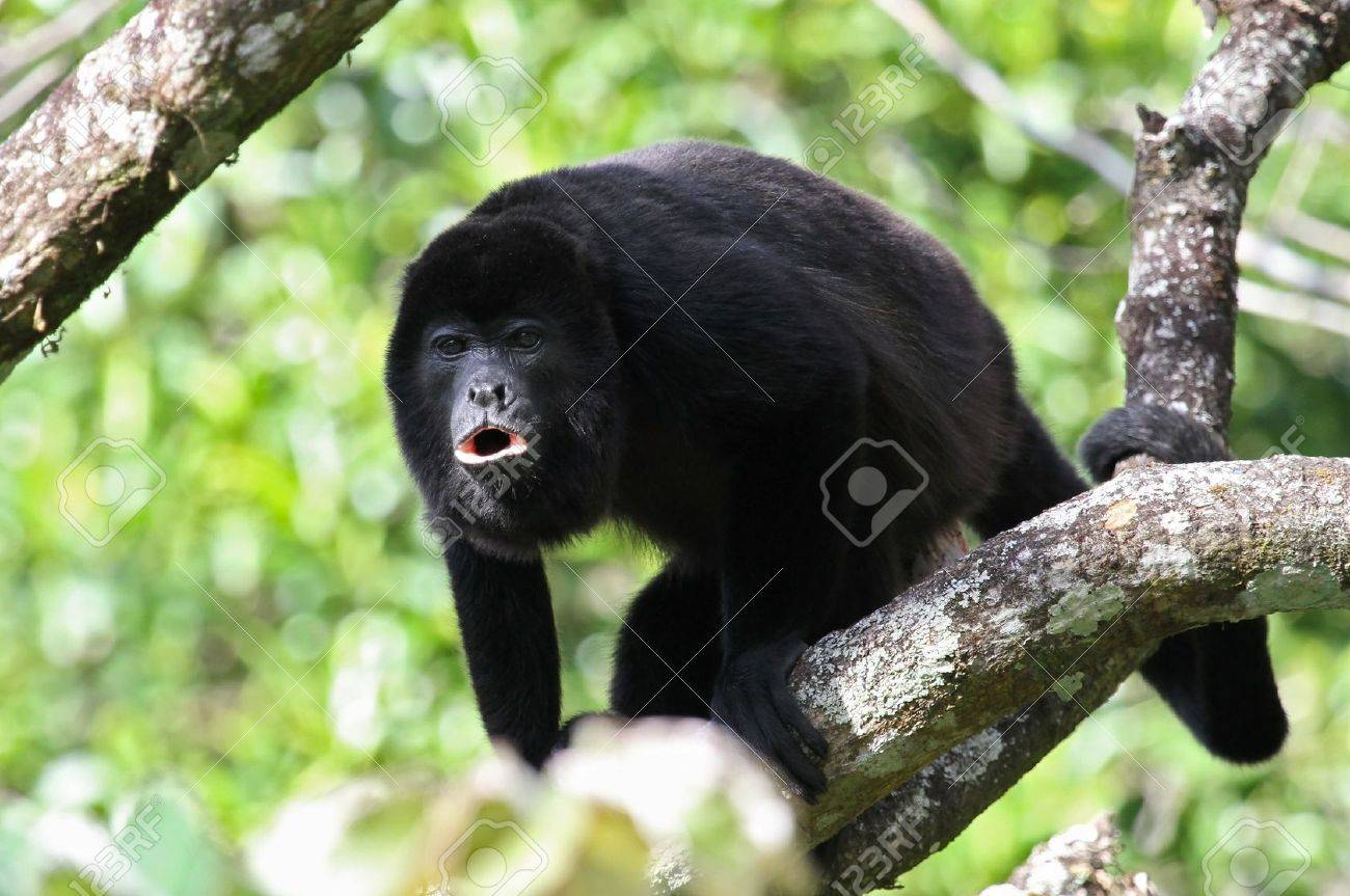 Adult Costa Rica