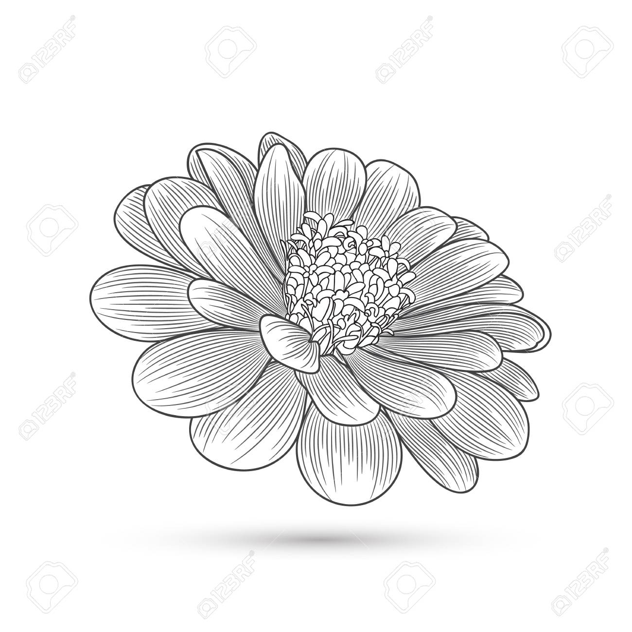 Abstract Hand Drawn Flower Zinnia Element For Design Royalty Free Cliparts Vectors And Stock Illustration Image 99262103