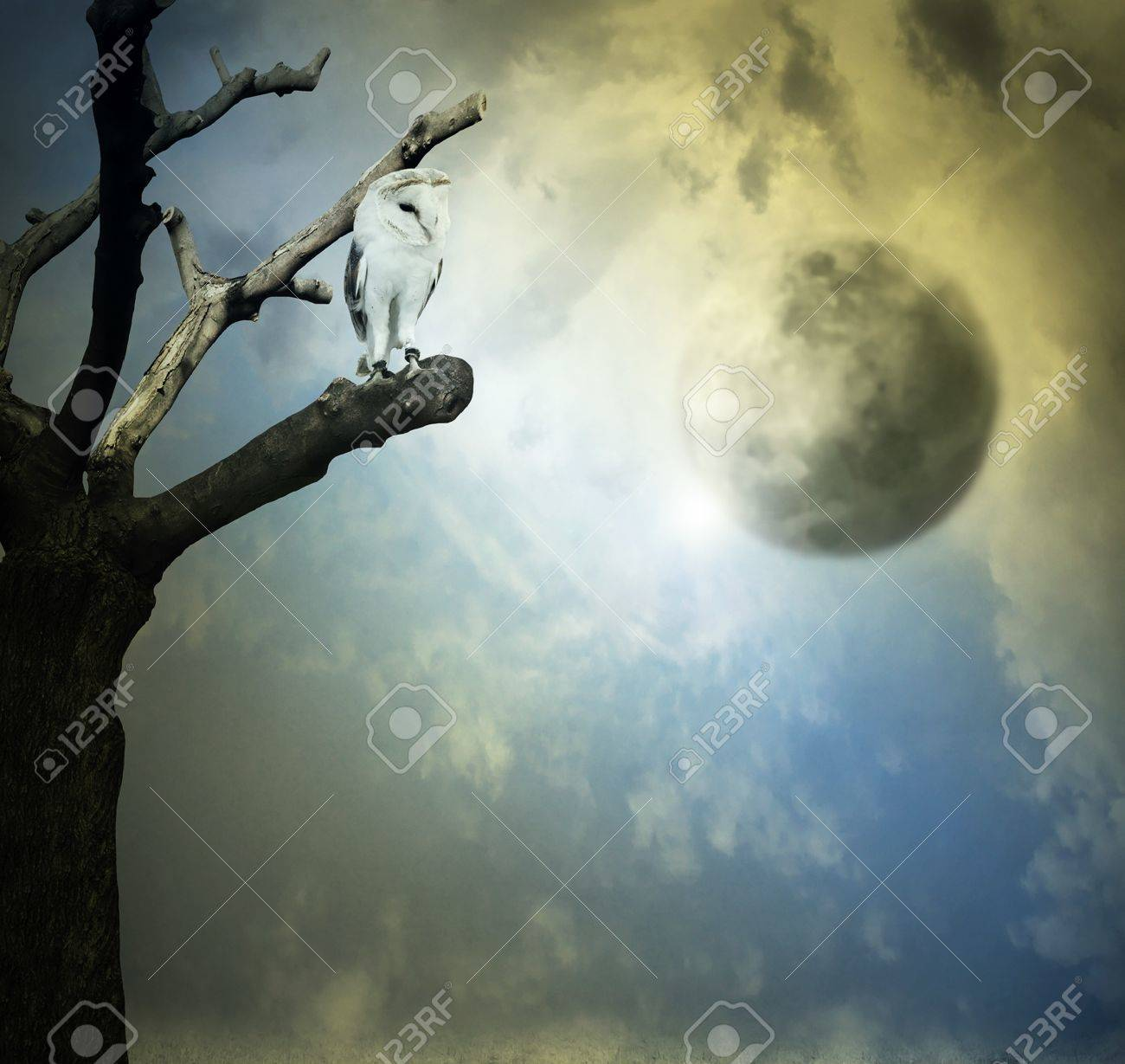 Beautiful artistic background representing a barn owl on a tree with beautiful sky with planets on the background - 17043092