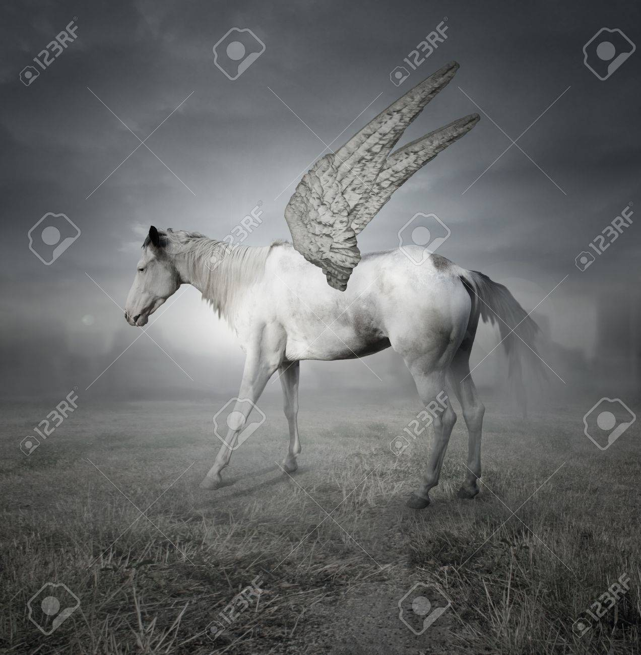 Fantasy Of A Beautiful White Horse With Wings Representing The Stock Photo Picture And Royalty Free Image Image 17859135