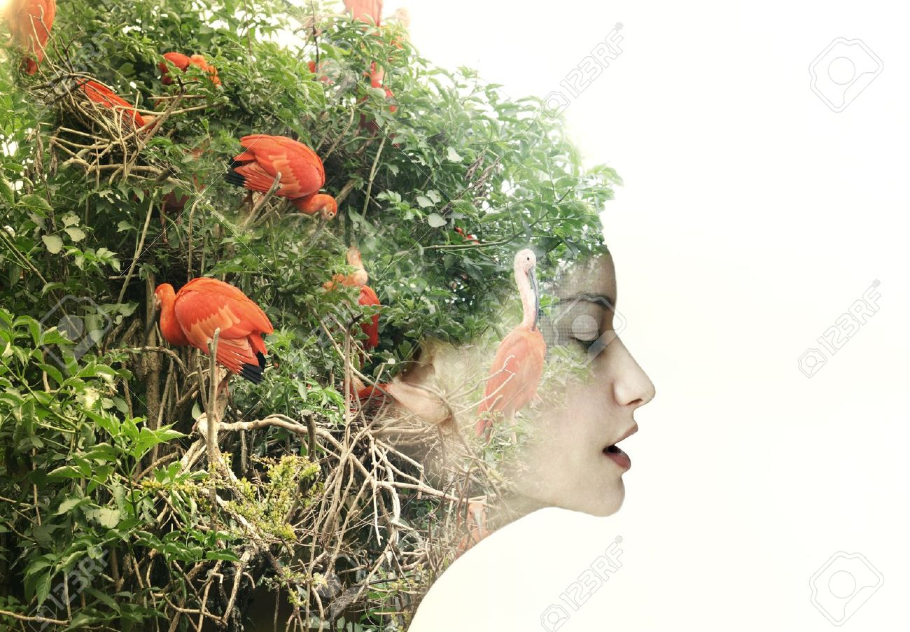 Artistic surreal female profile in a metamorphosis with nature Stock Photo - 20760219