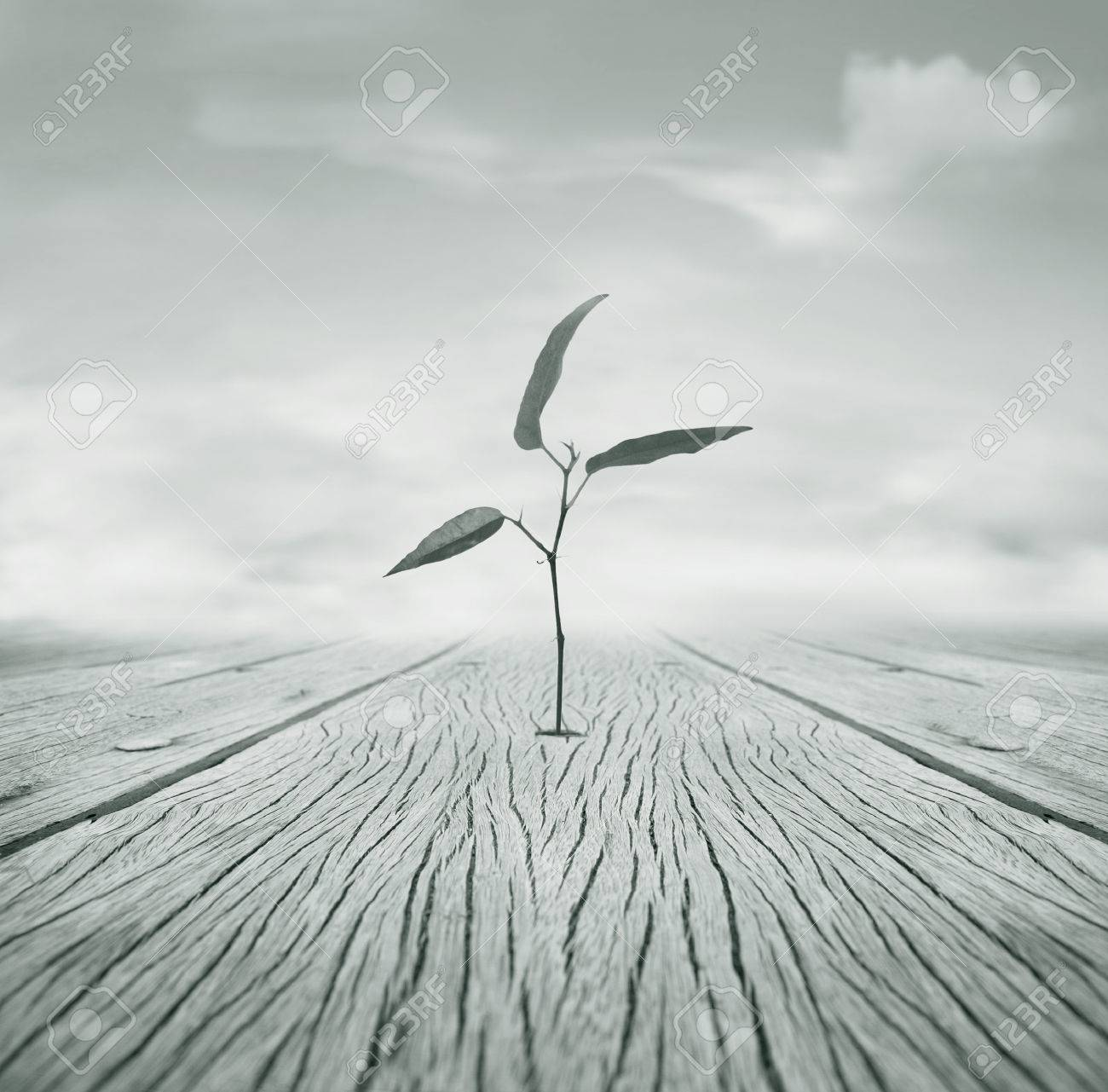 Beautiful poetic black and white image representing a little branch with leaves that grew escaping from a hole in the floor and cloudy sky in the background - 22837271