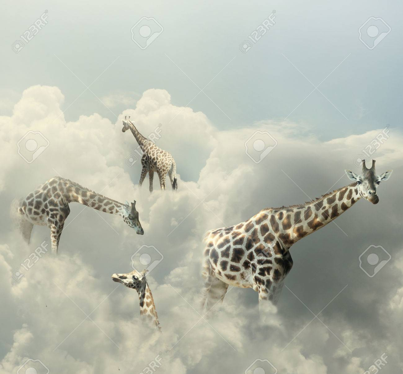Surreal image representing four giraffe walking in the clouds - 29308047