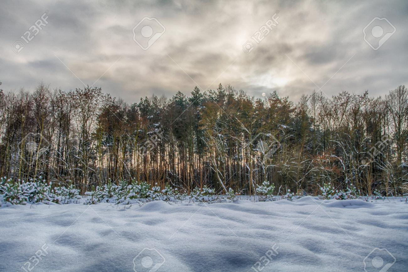 Winter landscapes on a frosty day. - 162831067