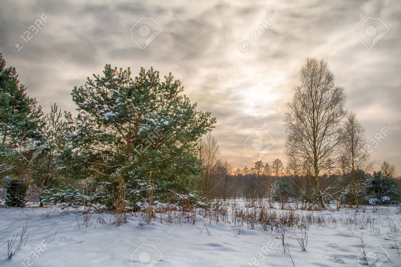 Winter landscapes on a frosty day. - 162831068