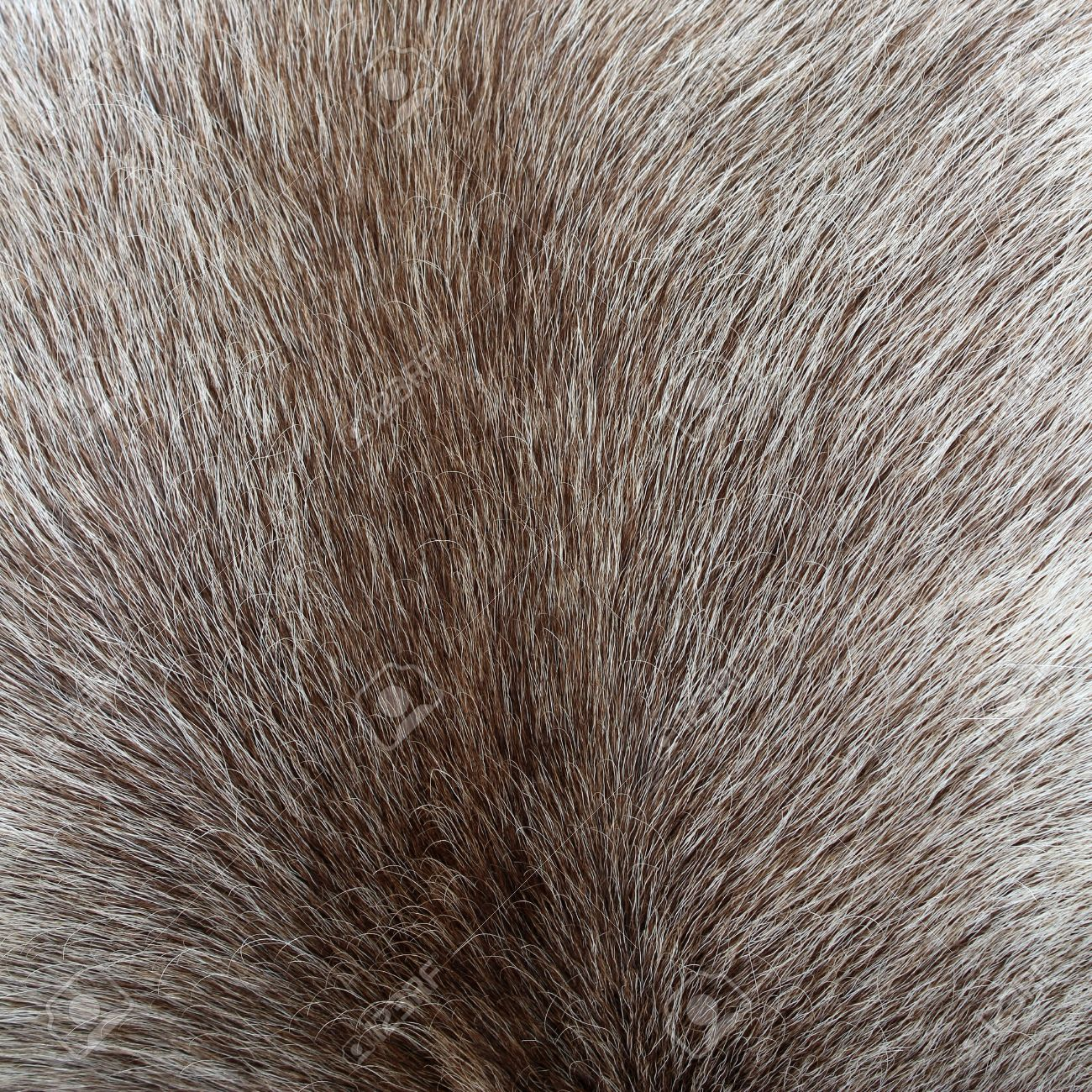 21219764-Close-up-of-reindeer-colored-fur-texture-Stock-Photo.jpg