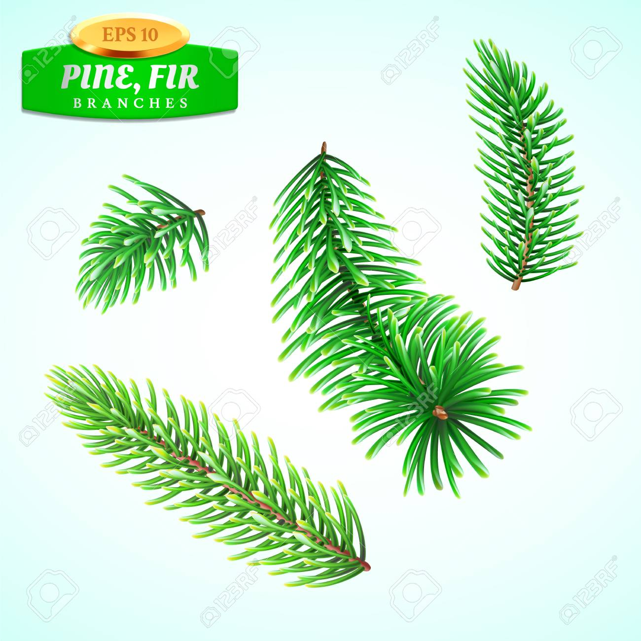 Set Of Fir Branches Christmas Tree Pine Tree Symbol Of Christmas