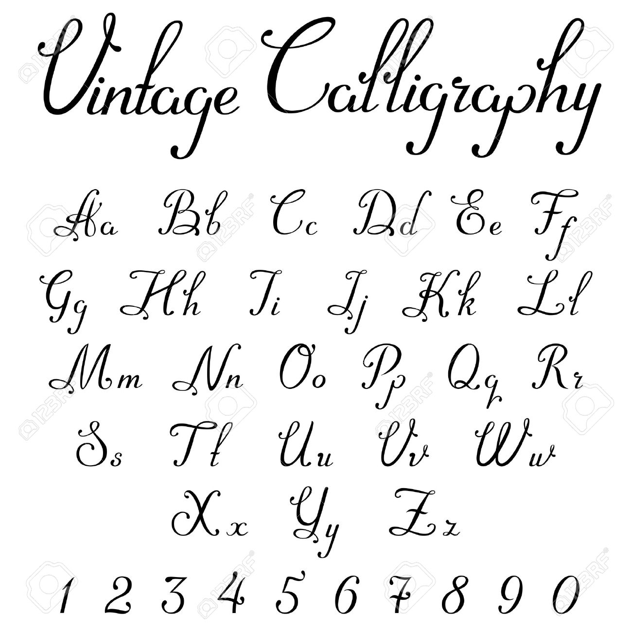 Vintage Calligraphic Script Font Linear Vector Handmade Calligraphy
