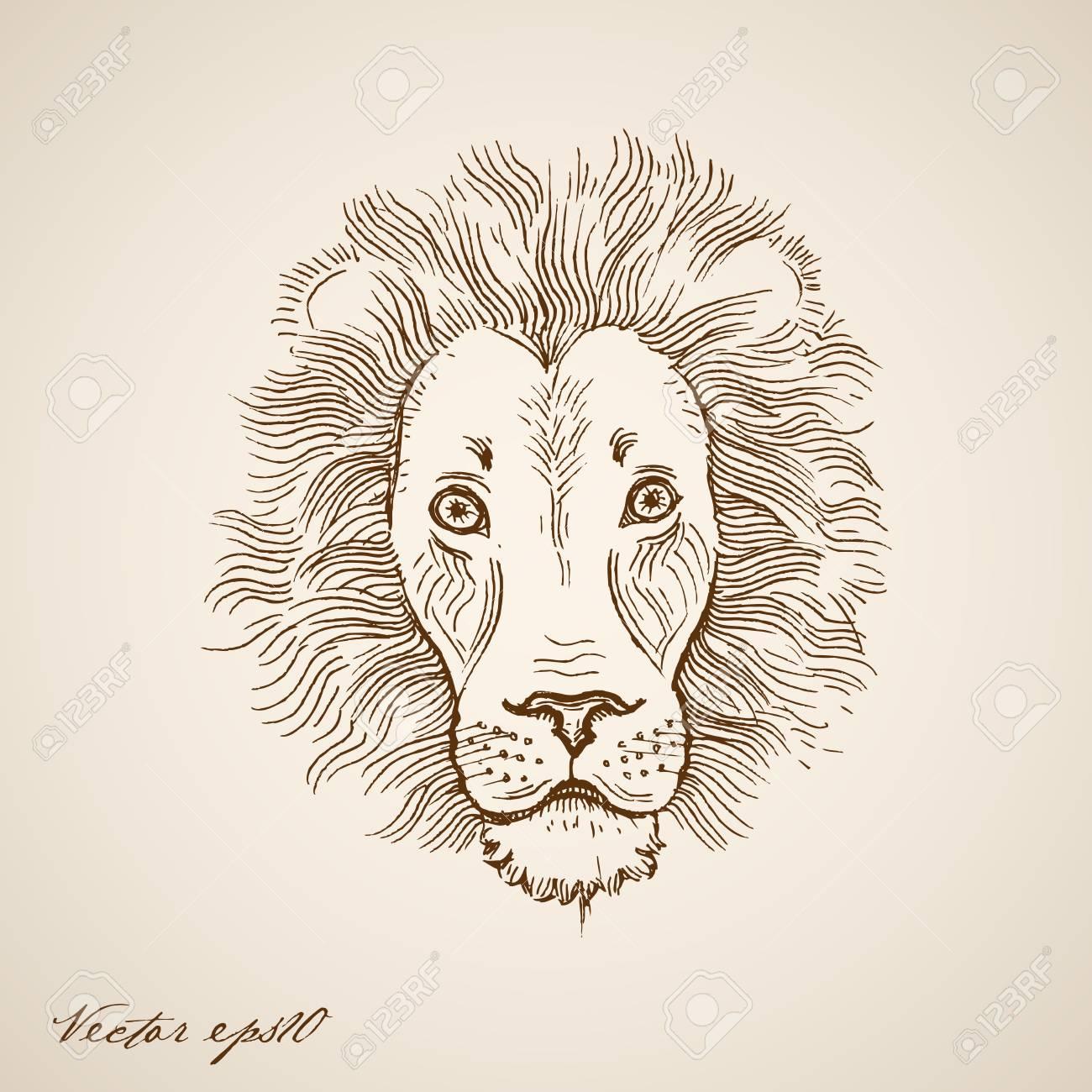 Engraving vintage hand drawn lion doodle collage pencil sketch