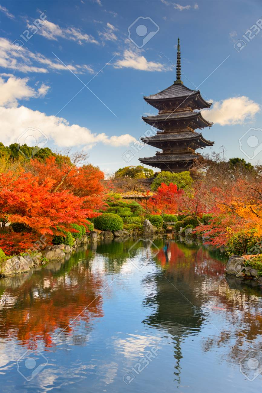 秋の東寺五重塔京都日本 の写真素材画像素材 Image 62651539