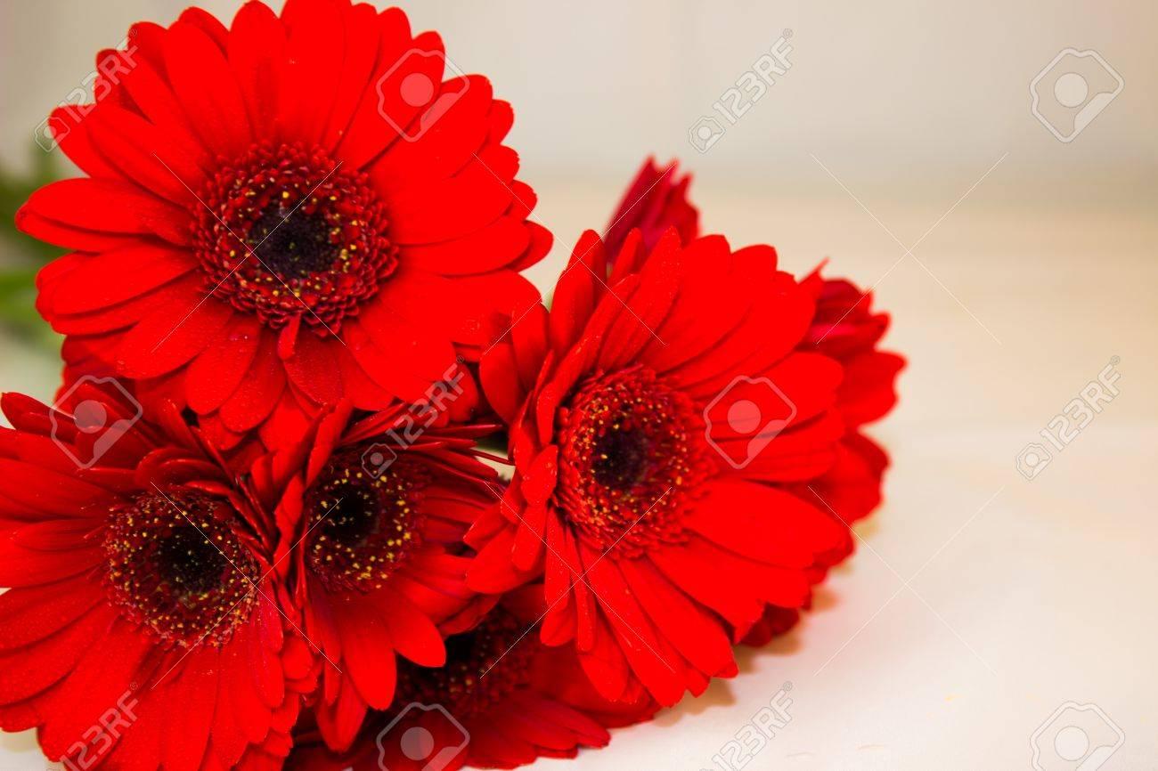 赤いガーベラの花束
