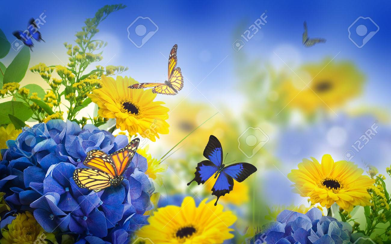 Amazing Background With Hydrangeas And Daisies Yellow And Blue