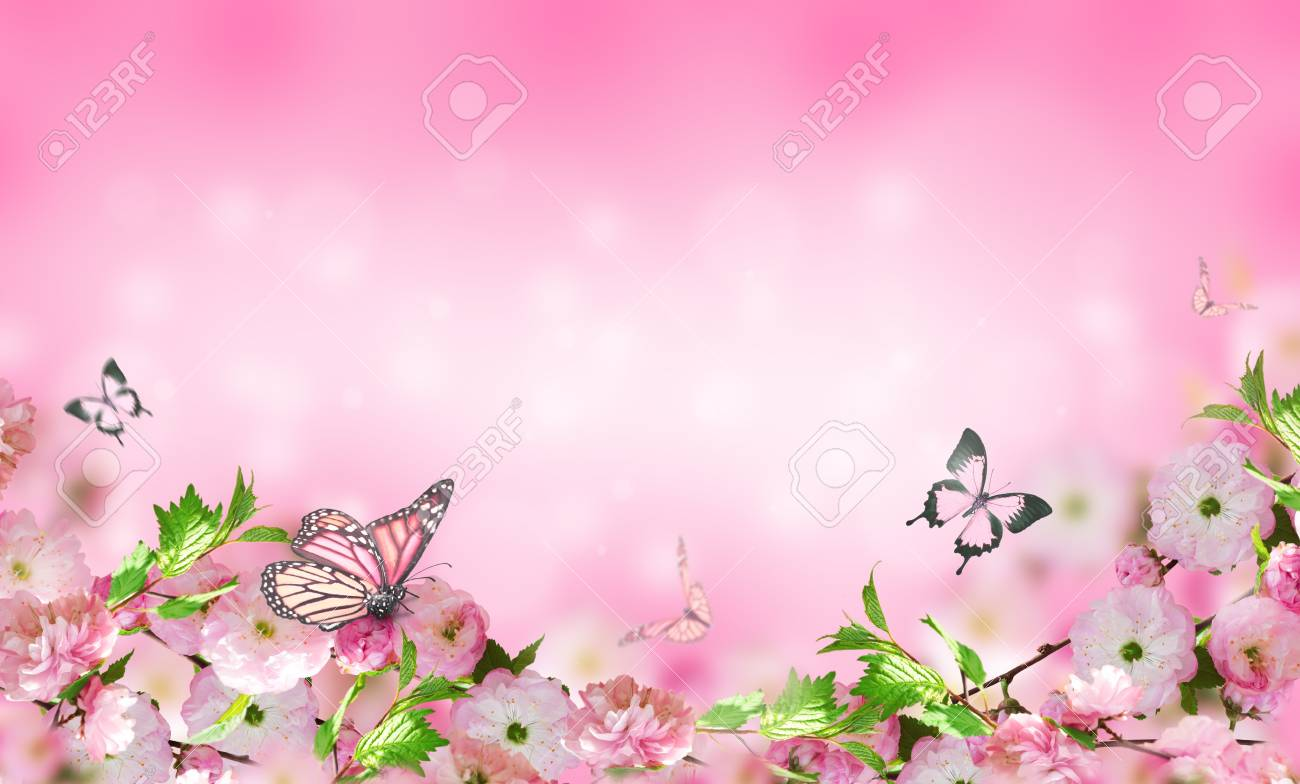 Flowers Background With Amazing Spring Sakura With Butterflies