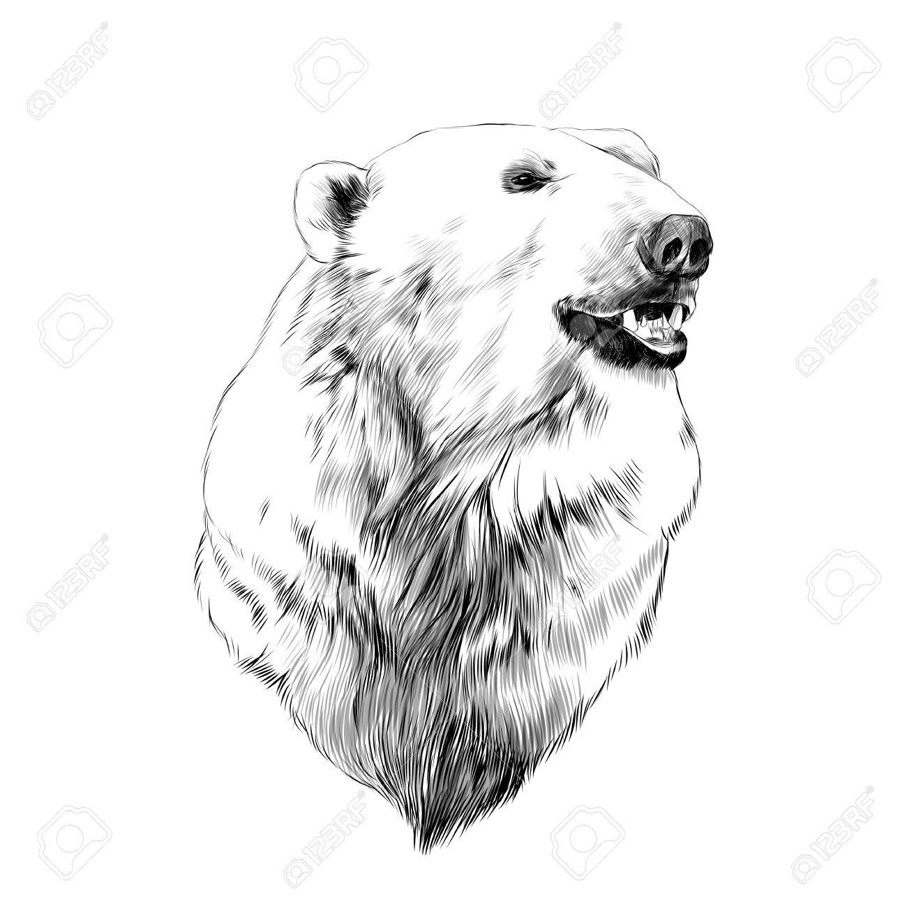 the head of the polar bear profile looking to the side sketch