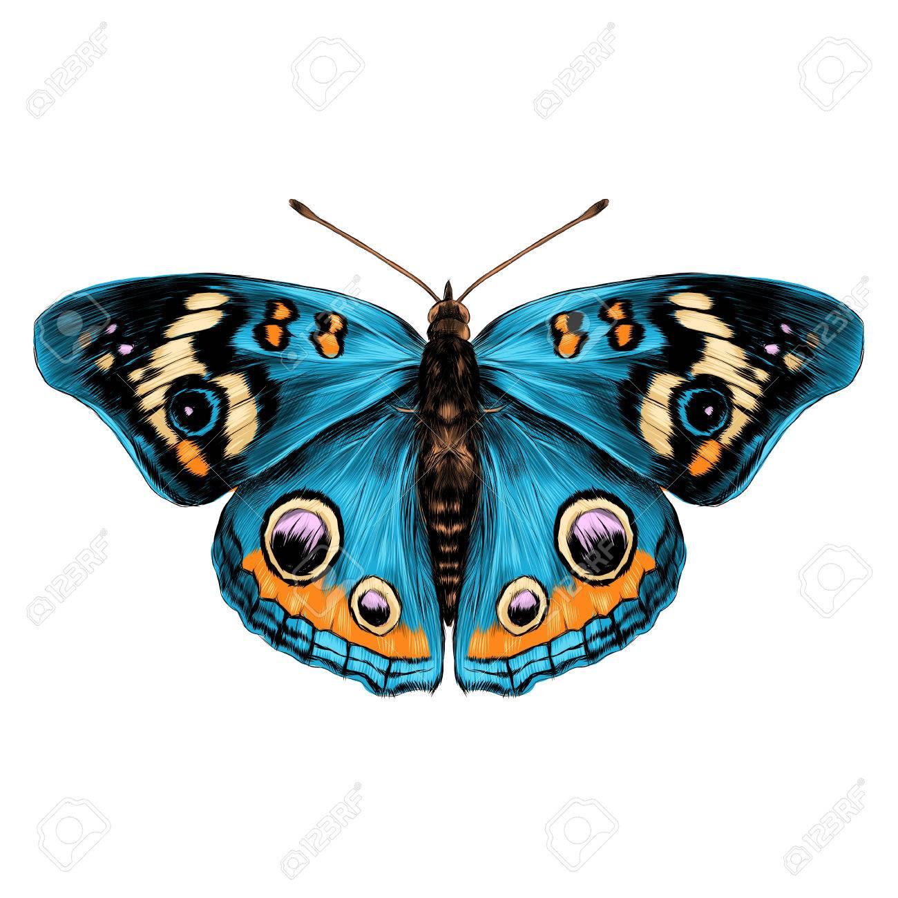 Papillon Avec Ailes Ouvertes Vue De Dessus De Symetrie Esquisse