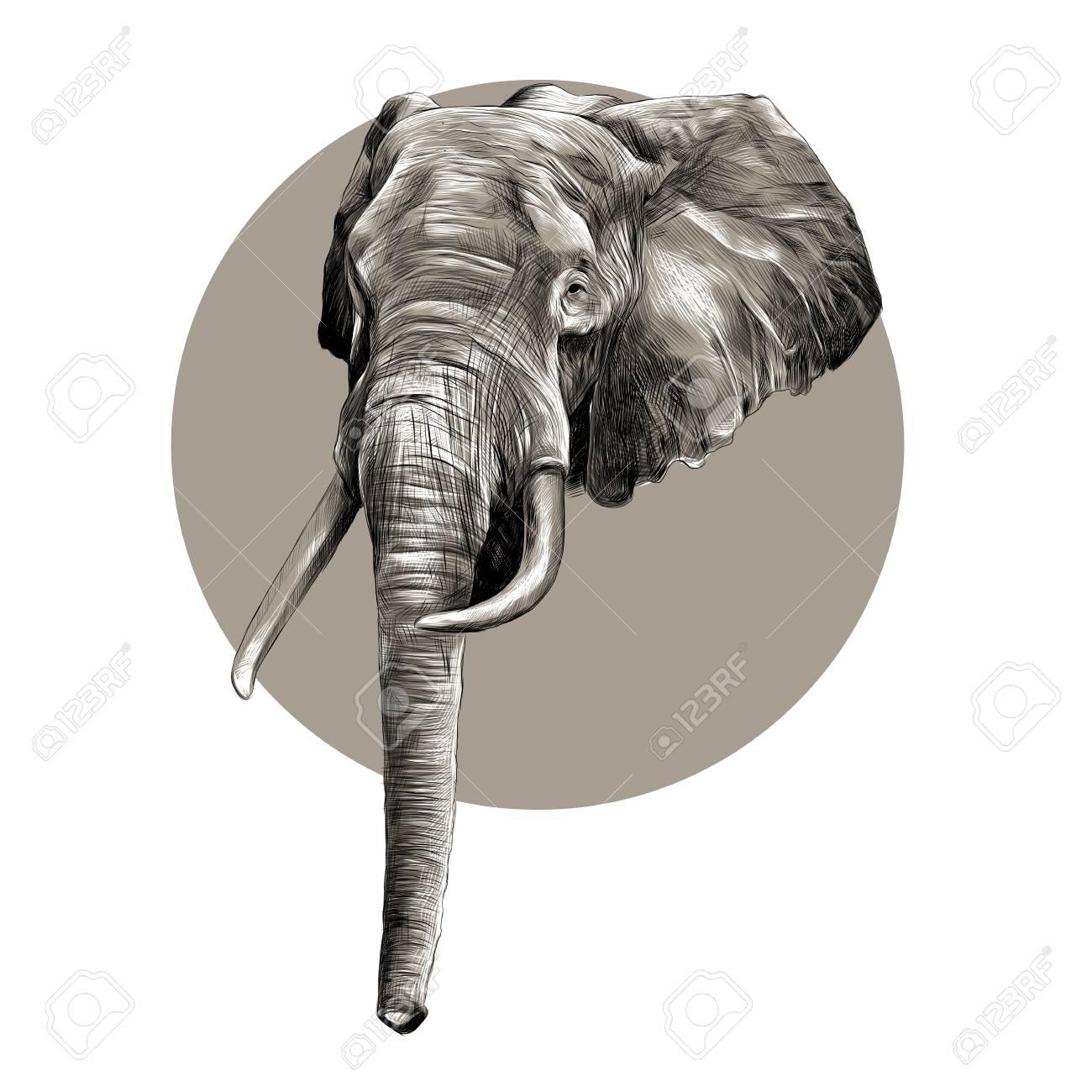 La Tête Dun éléphant Croquis Graphiques Vectoriels Motif Noir Et Blanc Sur Le Cercle Gris