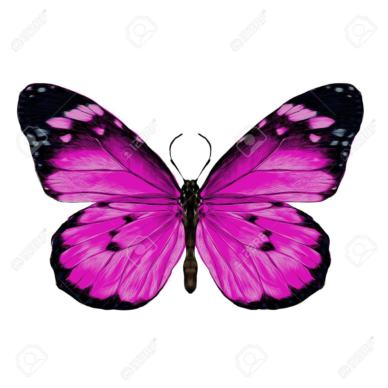 Dessin Papillon En Couleur conception artistique d'un papillon rose avec des ailes ouvertes vue