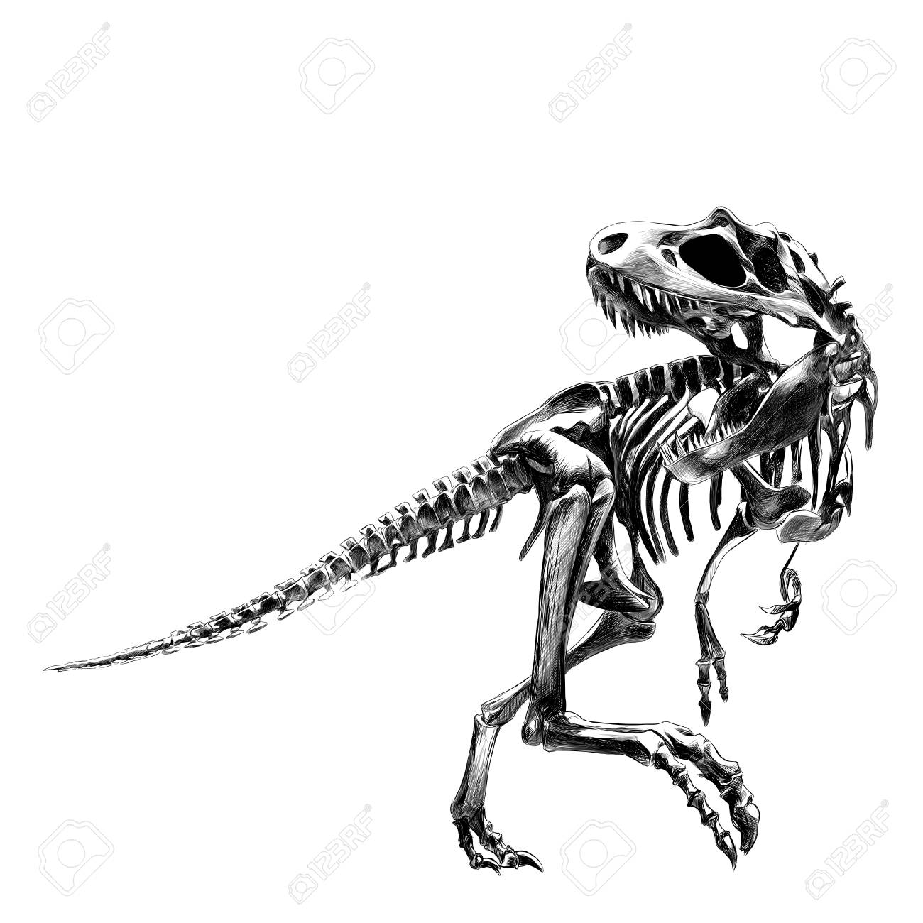 Dinosaur skeleton Tyrannosaurus, bone, black and white drawing,