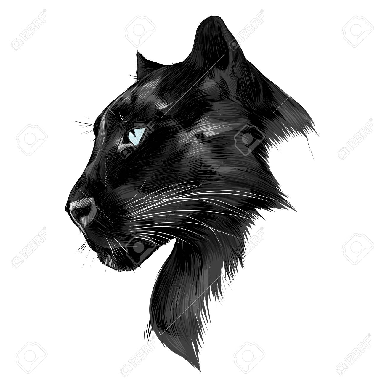 The head is black Panther's profile looking into the distance, graphics sketch vector black and white drawing. - 74346746
