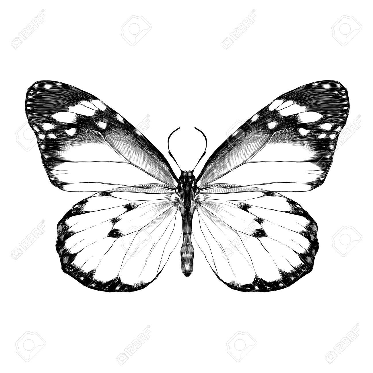 Aile De Papillon Dessin un papillon avec des ailes ouvertes vue de dessus, le dessin